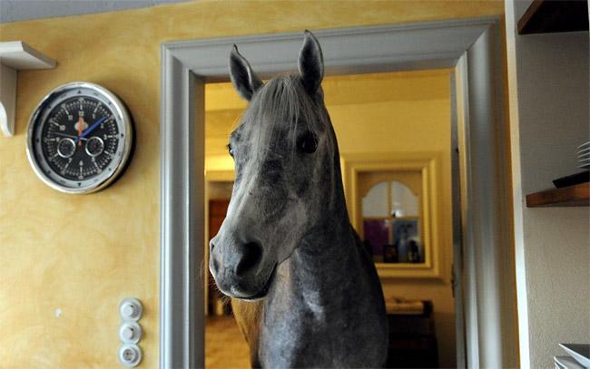 Nasar pet horse of Dr. Stephanie Arndt Photo by Carsten Rehder