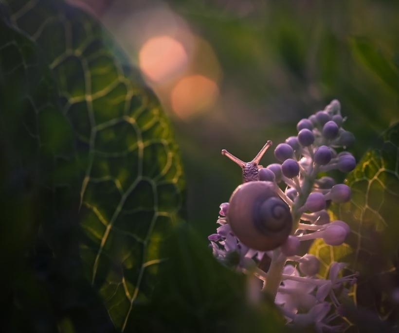 ©Vyacheslav Mishchenko