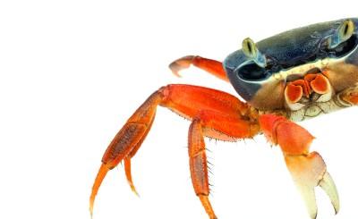 Ernest Goh animal photography crab