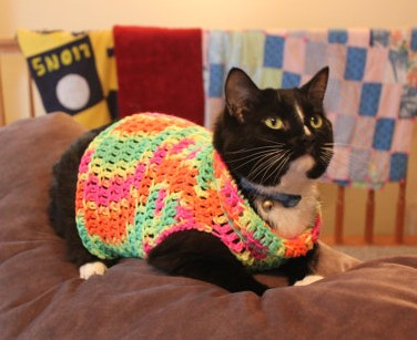 """This is called """"Jamaican Cat Sweater."""" I kid you not. NothinWasted"""