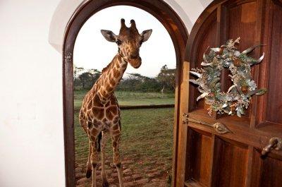©Giraffe Manor