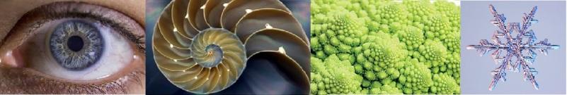 fractal nature composite