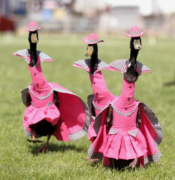 Pied Piper Duck Fashion Show Sydney Australia Brian Harrington
