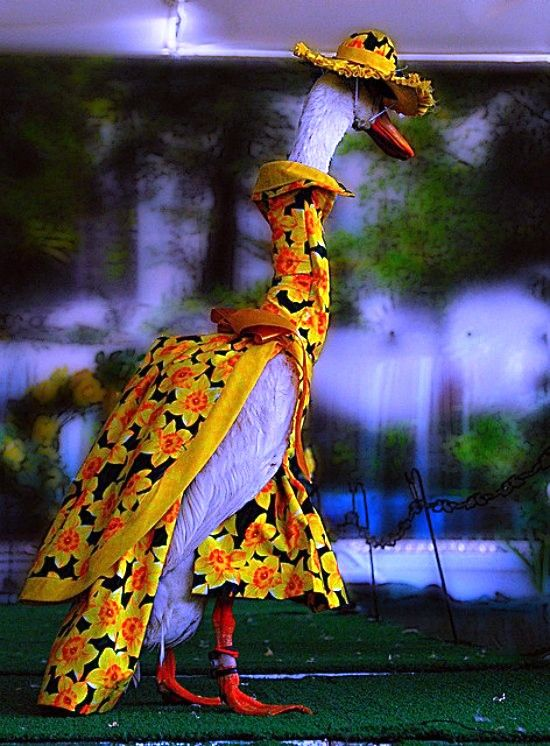 Pied Piper Duck Fashion Show Sydney Australia costume by Brian Harrington