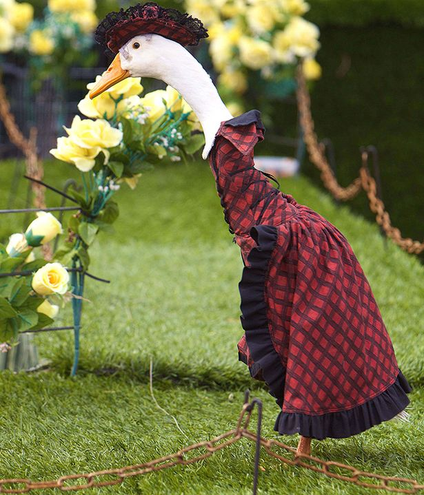 Pied Piper Duck Fashion Show Sydney Australia Brian Harrington
