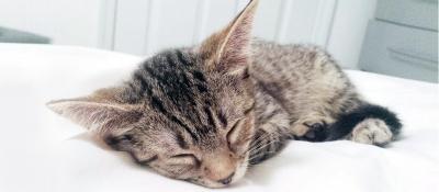 Meow Parlour kitten