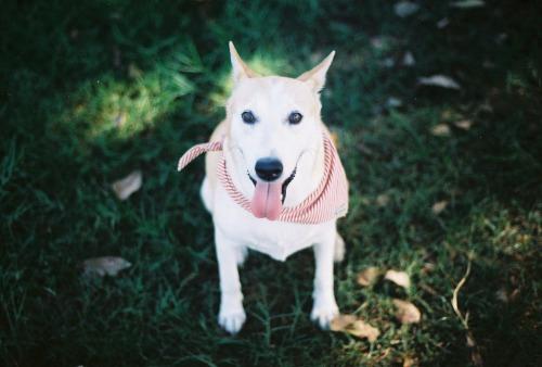 Gluta the rescue dog by Sorasart Wisetsin
