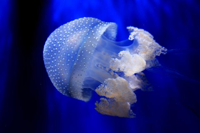 jellyfish by Lorenzo De Lucchi