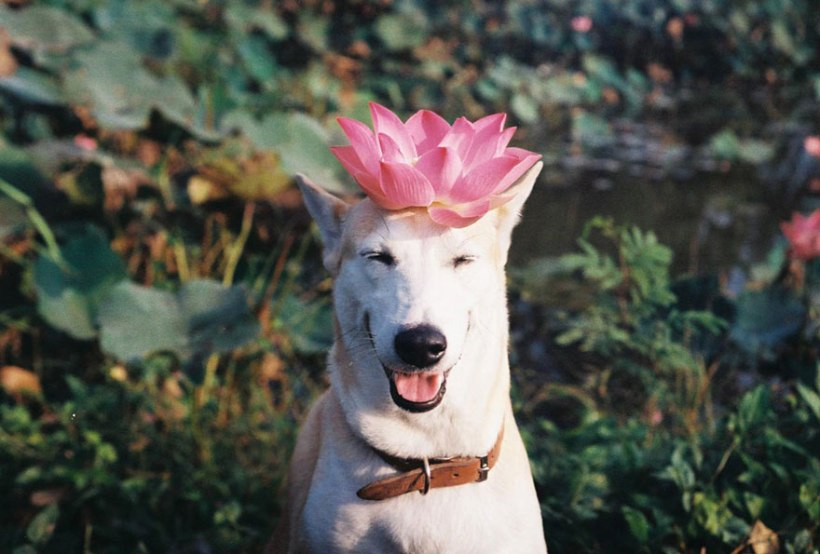 Gluta the dog with things on her head by Sorasart Wisetsin