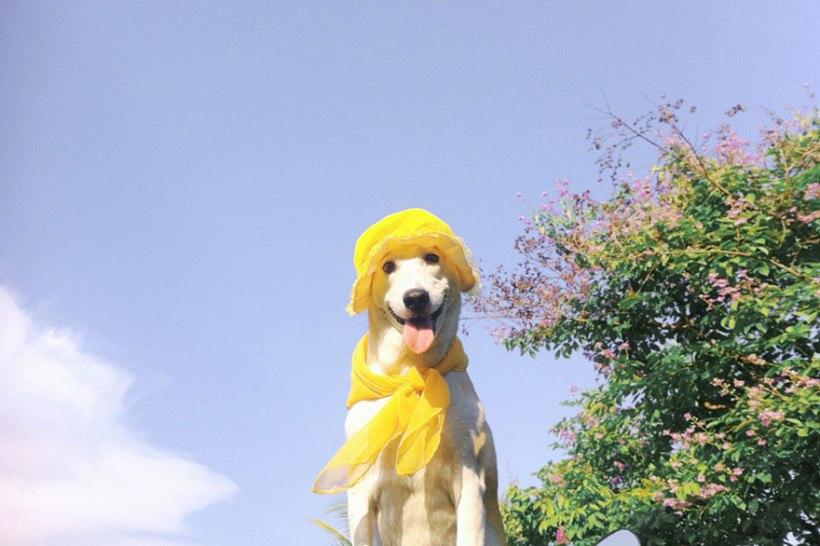 Gluta the dog in costume by Sorasart Wisetsin