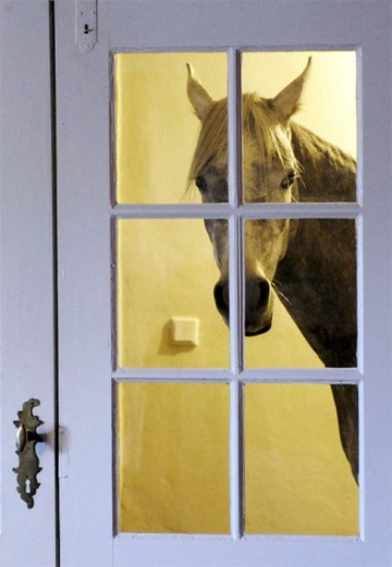 5. Mr. Ed Could Talk, But Wilbur Still Made Him Stay Outside