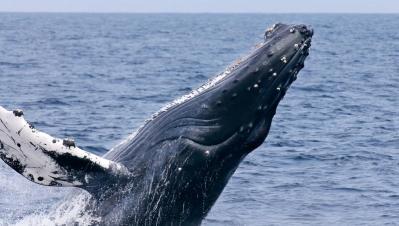 Photo: Monterey Bay Aquarium