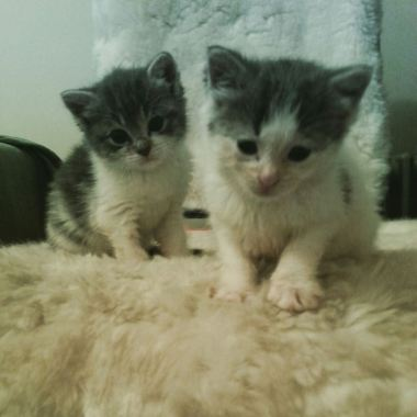Newest kitten residents of Brooklyn