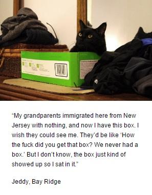 Jim Tews cat Felines of New York