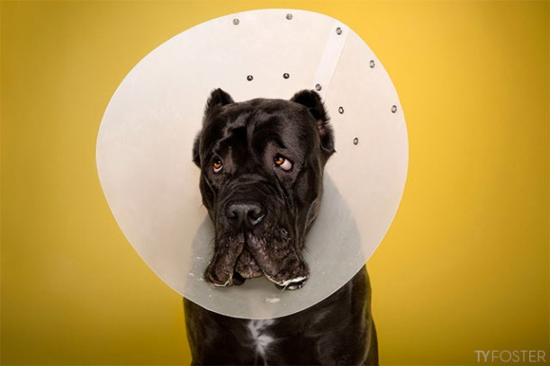 dog in cone of shame by Ty Foster