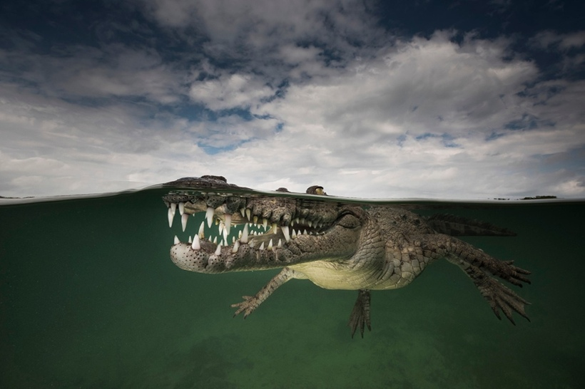 crocodile Cuba Matty Smith