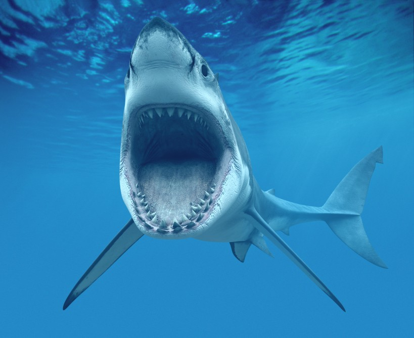 Great White Shark laughing