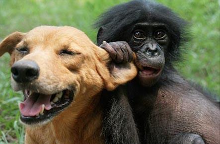 Bonobo and dog