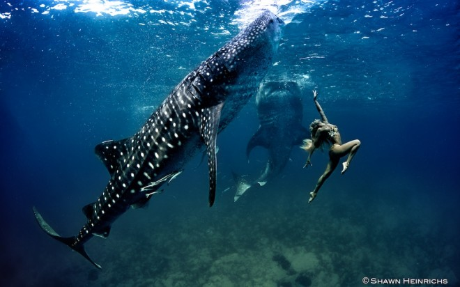 Whale Shark with model