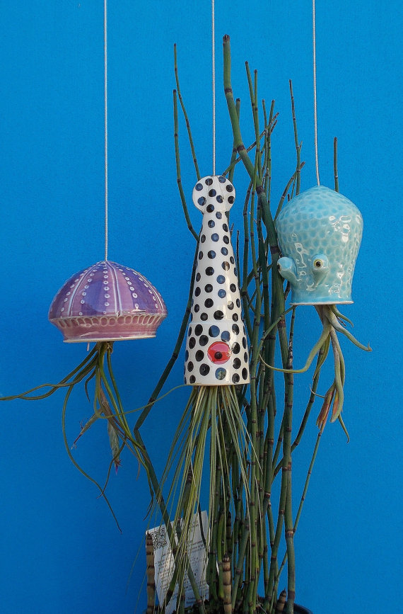 Large Air Plant Hanging Collection