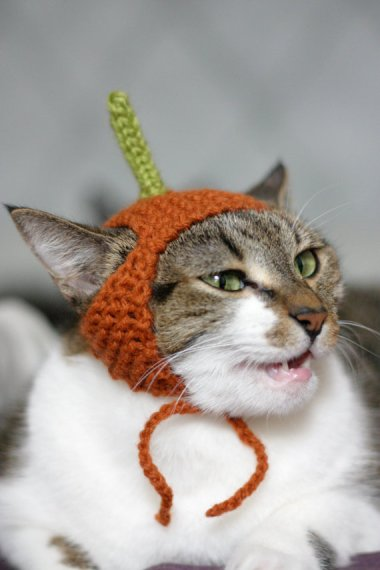 I would love to tell you what this cat is thinking, but I can't. This is a family show. By ScooterKnits