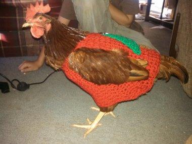 Chicken sweater! By BagsAndMoreByPam