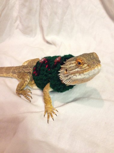Why, yes. That is an ugly Christmas sweater on my bearded dragon. Why do you ask? By EmilysBeardedShop