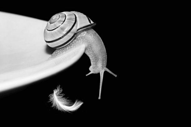 snail 0
