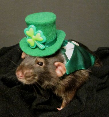 St. Patrick's Day, when even the rats are Irish. By PenelopesClosets