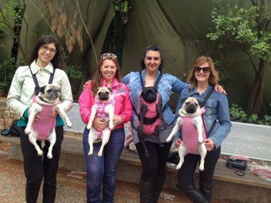 Look! It's a meeting of the Unhappy Pug Club! Humiliating dog carrier by MyPuppiesShop