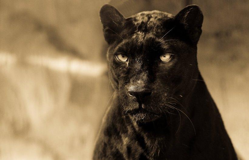 cat 1b