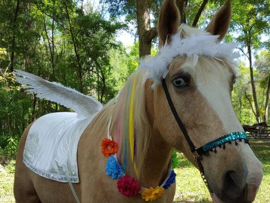 horse 0