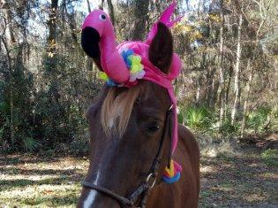 horse 3a