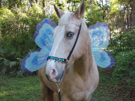 horse 6a