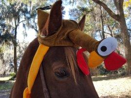 horse 8a
