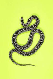 snake 1aa