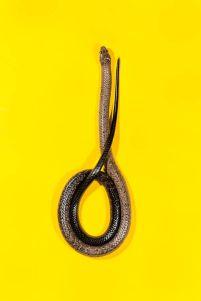 snake 1c