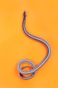 snake 1z