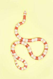 snake 6a