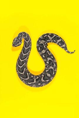 snake 7a