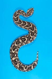 snake 7b