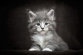 cat 0aa
