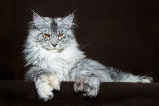 cat 10