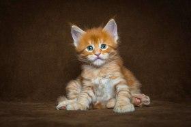 cat 17