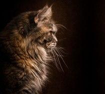 cat 4a