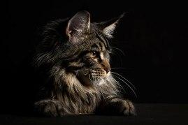 cat 8b
