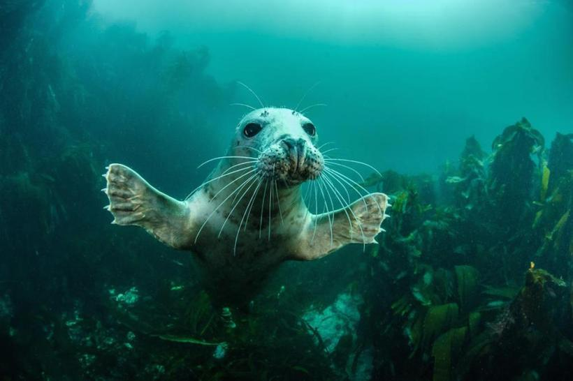"""Welcome to the Party"" (Grey Seal), Farne Islands, Northumberland, England, by Adam Hanlon"