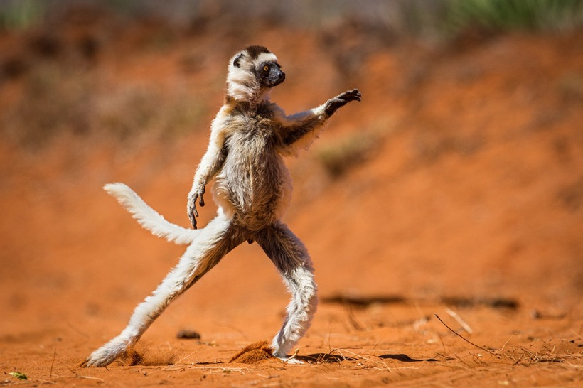 Highly Commended, Alison Buttigieg / Comedy Wildlife Photography Awards