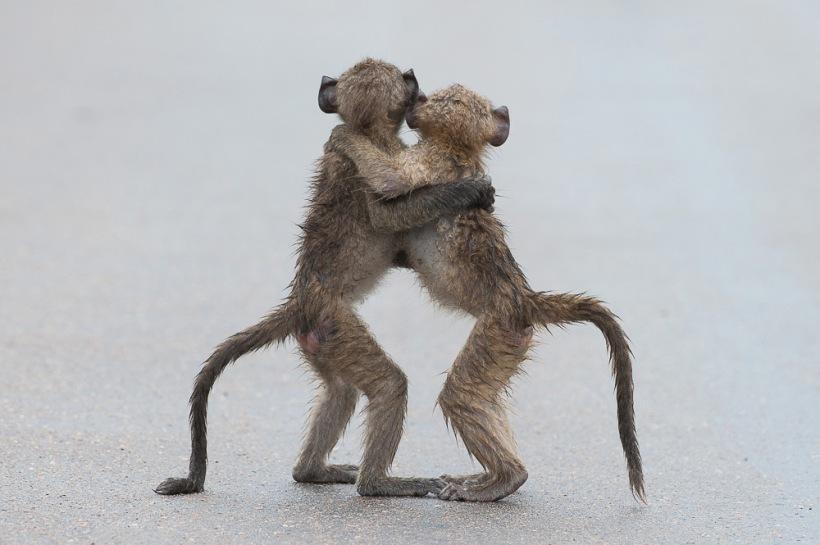 Tony Dilger / Comedy Wildlife Photography Awards