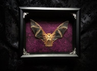 I have to say this is the first time I've ever wanted a taxidermied bat in a shadowbox! By Horribell